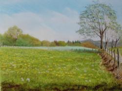 2003 Champs de fleurs aux Cabasses